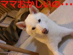 012_20090913200758.jpg