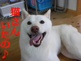 037_20090727195135.jpg