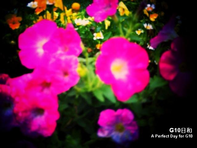 PICT0017_1.jpg
