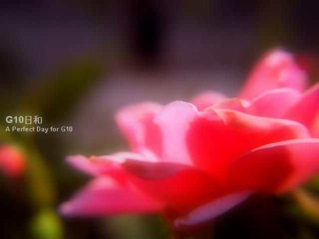 PICT0143.jpg