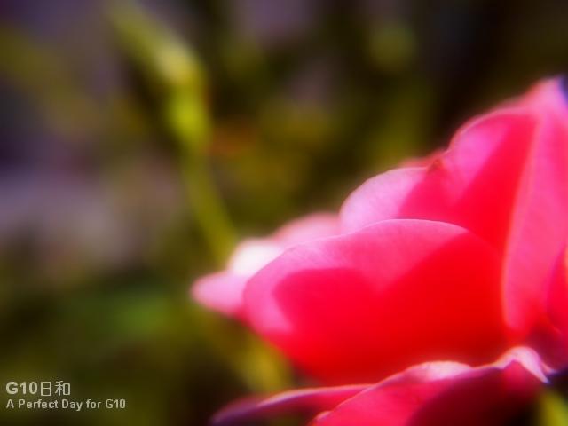 PICT0147.jpg