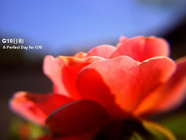 PICT0150.jpg