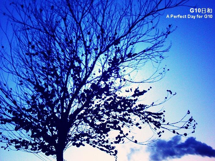PICT0343_1_1.jpg