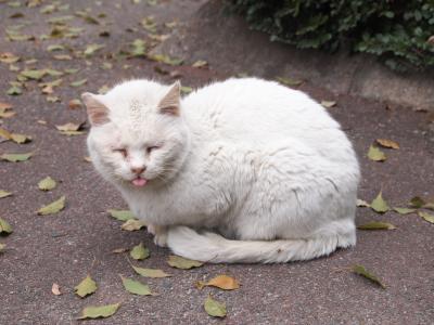 外ネコさん1