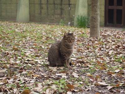 外ネコさん3