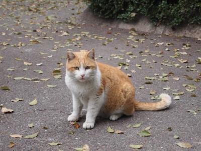 外ネコさん5