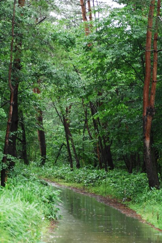 森の中へ・・・