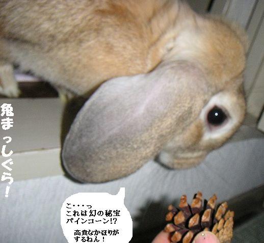 あきちゃんmeetsパインコーンの巻。