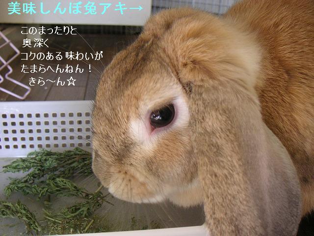 美味しんぼ兔アキ。