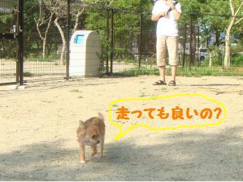 snap_akiyu2_201180214855.jpg
