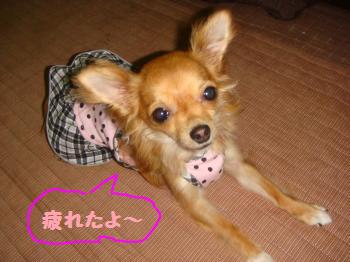 snap_akiyu2_20118120252.jpg