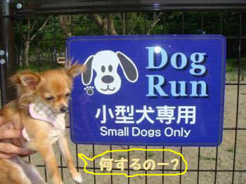 snap_akiyu2_20118585449.jpg