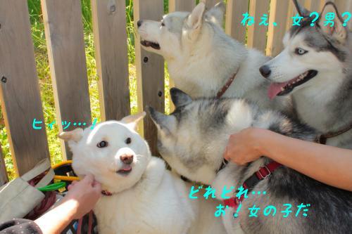 142_convert_20110506220739.jpg