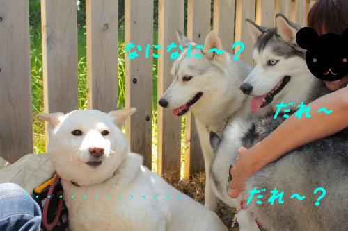 143_convert_20110506220121.jpg