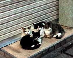 cat110604.jpg