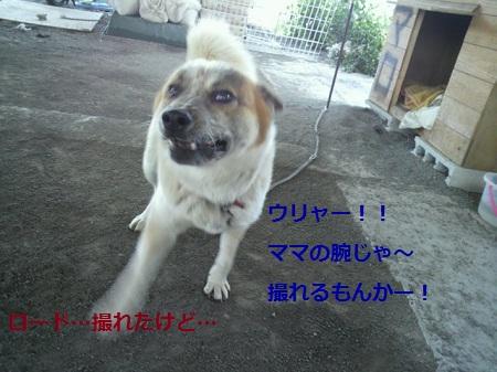 CA4G3PR4.jpg