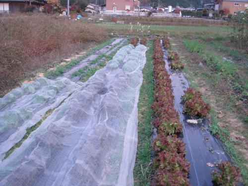 和ごころ農園2