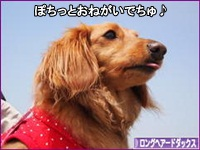 にほんブログ村 犬ブログ ロングヘアードダックスフンドへ