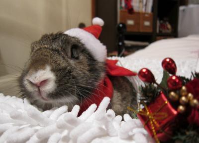 「サンタさん サンタさん」