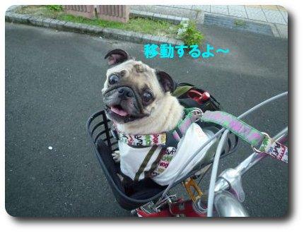 image9_20110906225739.jpg