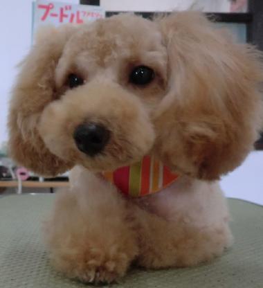 20110911井本あんず 後①