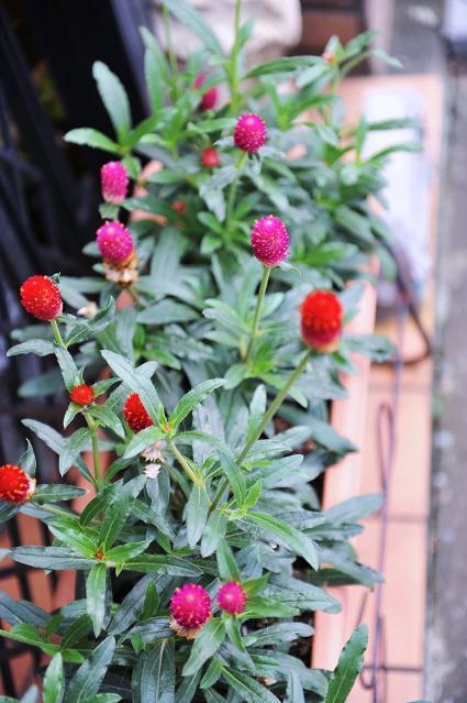 082  植物