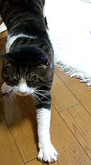 2009-8-19-f.jpg