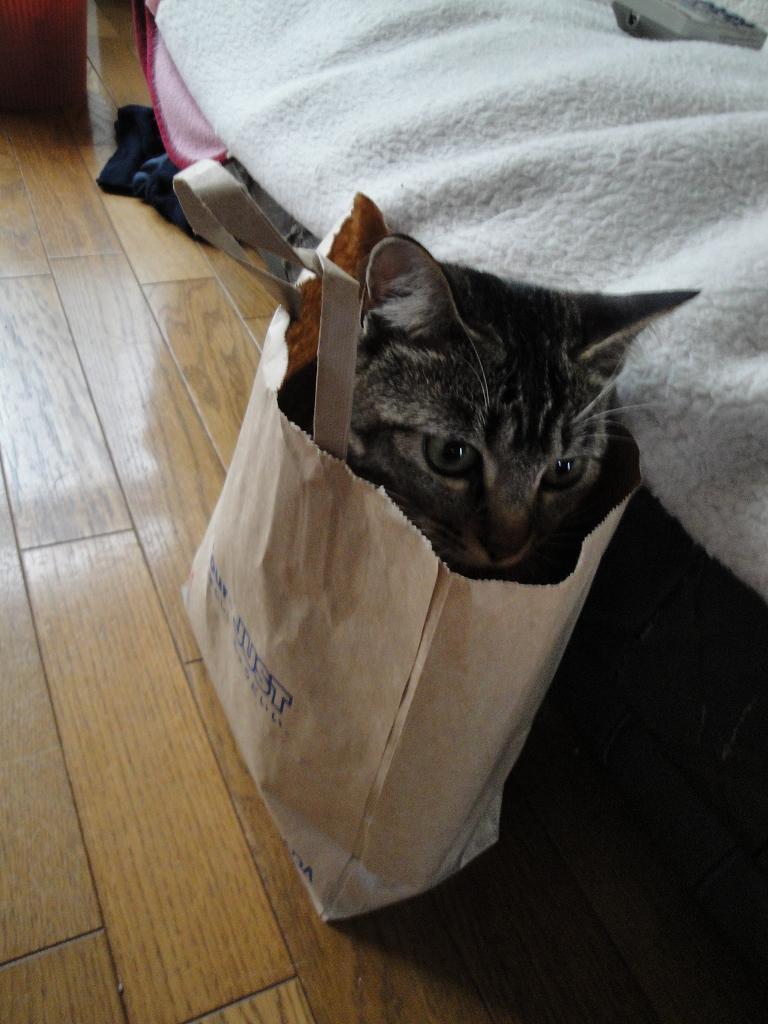 ヤマダ電機で買ってきた猫