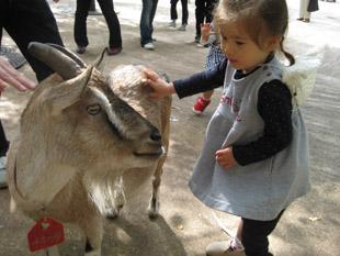 goat091013.jpg