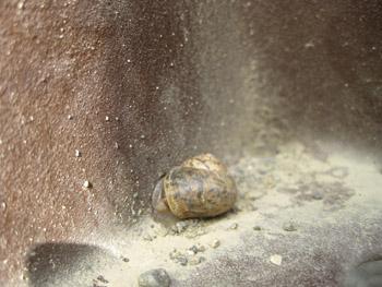 snail091103.jpg