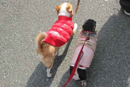 散歩好き2