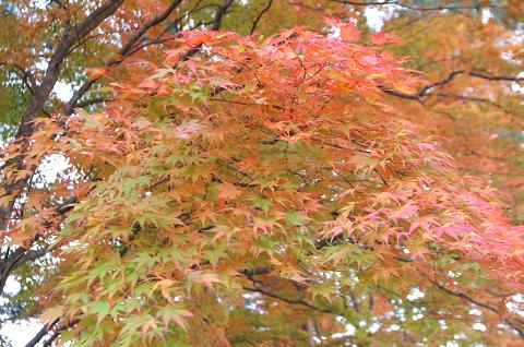 09.10.25姫沼にて