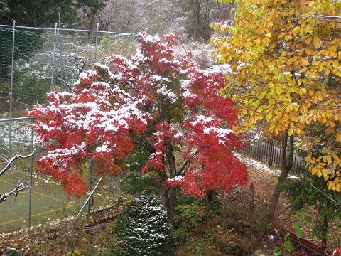 09.11.03初雪当館の庭にて