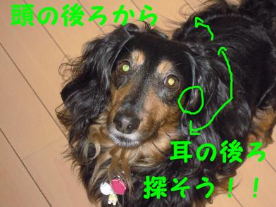 DSCN0142.jpg