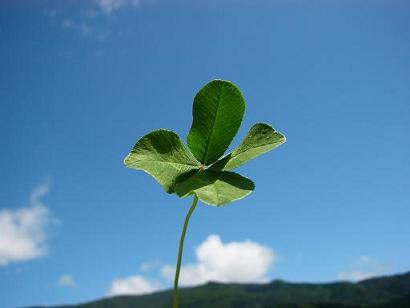 Four_leaf_clover3.jpg