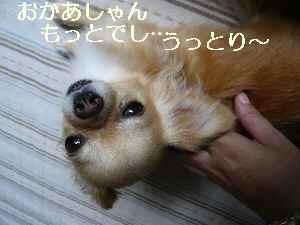 blog2009072402.jpg