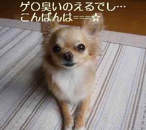 blog2009072701.jpg