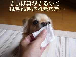blog2009072702.jpg