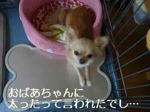 blog20090730.jpg