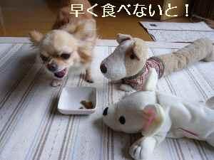 blog2009073101.jpg