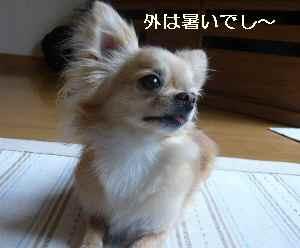 blog2009080301.jpg