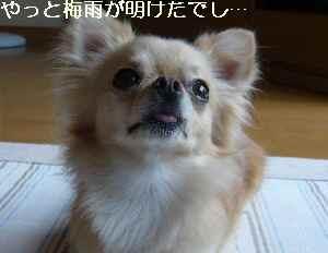 blog2009080302.jpg