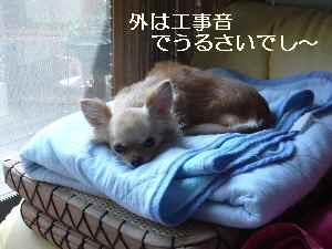 blog2009080401.jpg