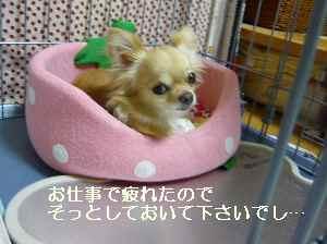 blog2009080501.jpg