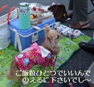 blog2009080602.jpg