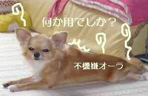 blog2009080702.jpg