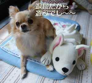 blog2009081001.jpg