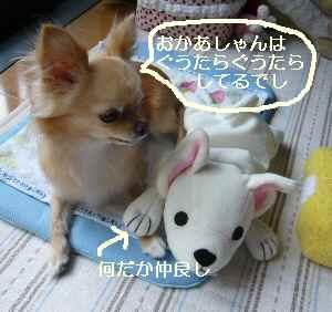 blog2009081002.jpg
