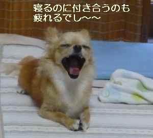 blog20090814.jpg