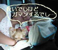 blog2009081502.jpg
